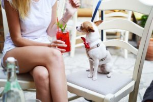 Top 10 Furniture Ideas for Pet Lovers