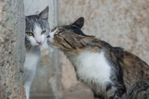 Do cats feel love when you kiss them ?- A deep insight