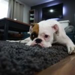 How to Plan Your Trip While Leaving Your Pet Behind?