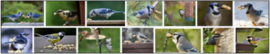 Can Birds Eat Salted Peanuts? Do Birds Like Salted Peanuts? ** New