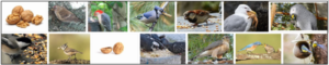 Can Birds Eat Walnuts? What Can Birds Eat? ** Updated