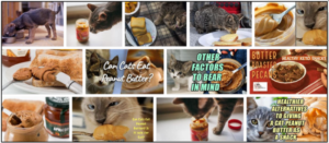 Can Cats Eat Butter? Discover If Butter Safe For Your Feline Friends ** Updated