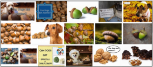 Can Dogs Eat Acorns? Do They Even Like Eat Or Not ** New