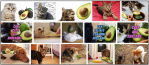 Can Cats Eat Avocado? Should You Feed Or Should You Avoid ** New