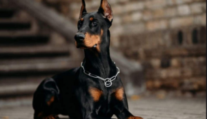 Top 10 Guard Dogs [2021 Reviews]