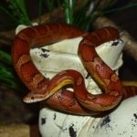 How To Choose The Best Pet Snake ?