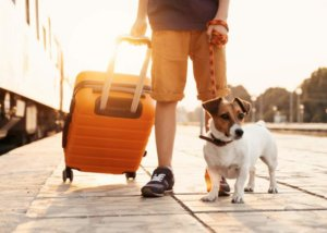 Pet Travel Essentials: Must-Haves When You Travel With Your Pet