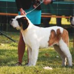 10 Tips for Your First Dog Show or Competition